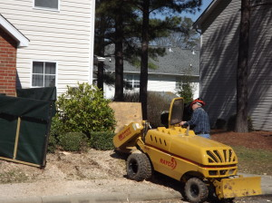Charlotte Stump Grinding In Progess