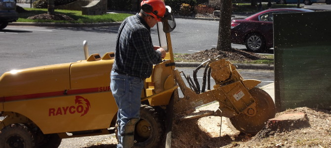 Apartment Complex- Charlotte Stump Grinding