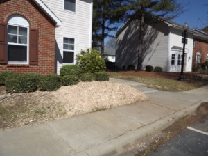 Charlotte Stump Grinding Completed