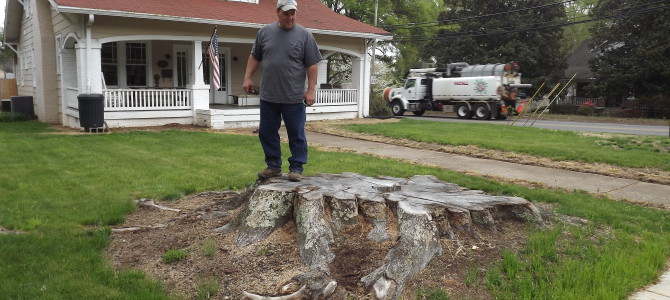 Is Stump Removal A D-I-Y Job?